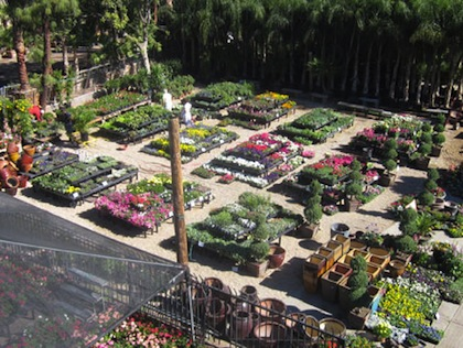 Best Plant Nurseries In Houston To